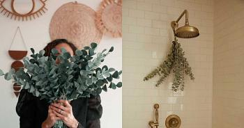 6 places à Montréal et environs où acheter de l'eucalyptus pour convertir ta douche en spa