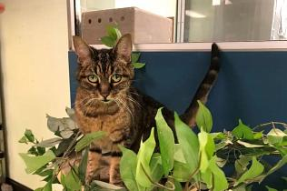 SPCA de Montréal : Becky se cherche une nouvelle famille